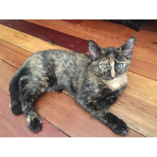 Photo of Aurora