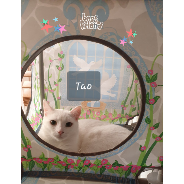 Photo of Tao