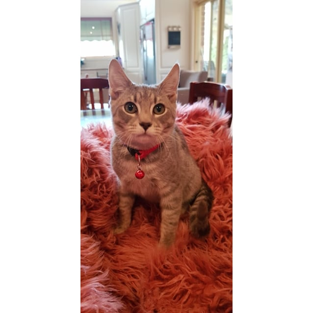 Photo of Broady