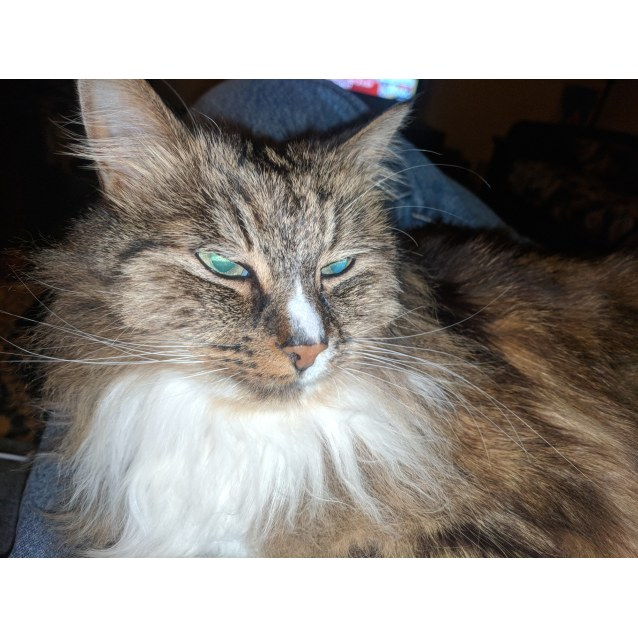 Photo of Lois   Located In Ascot Vale