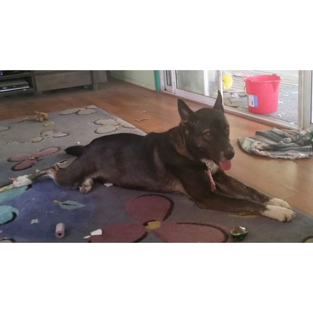 Photo of Akela