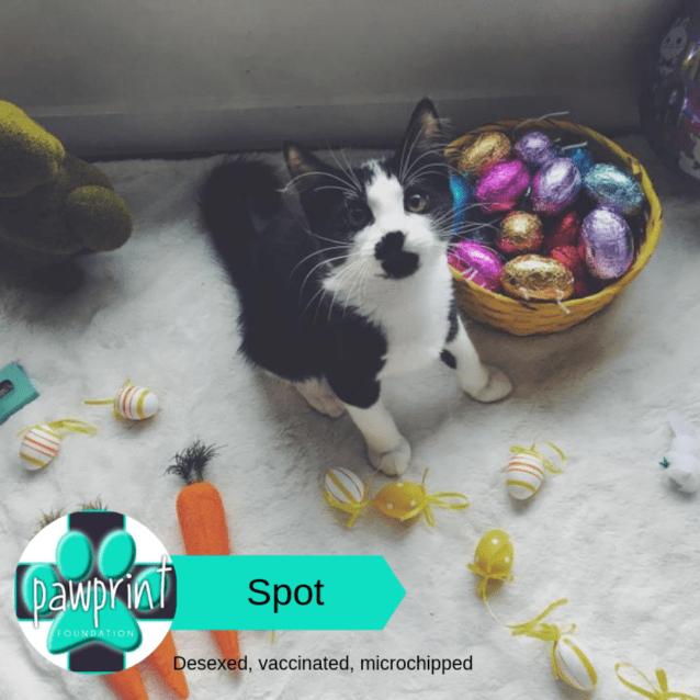 Photo of Spot