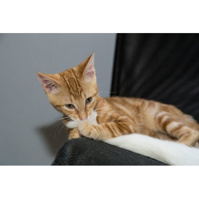 Photo of Ginger Ninja