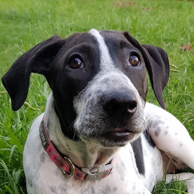 Photo of Pepper