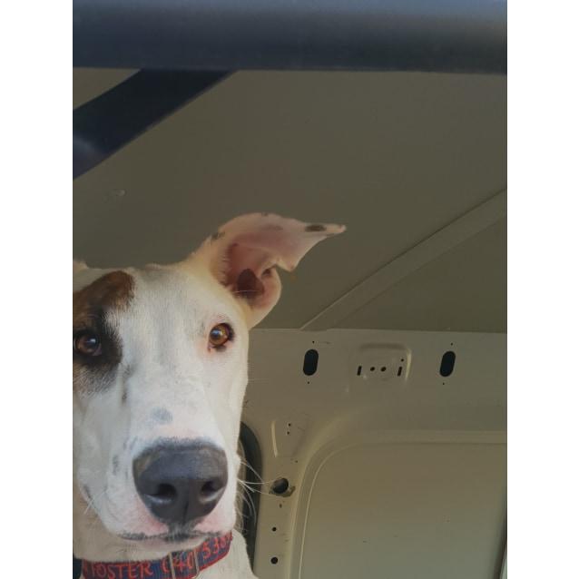 Photo of Barkley