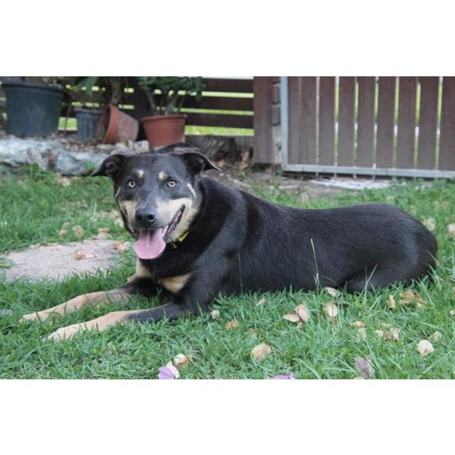 Photo of Dusty (Adoption Pending)