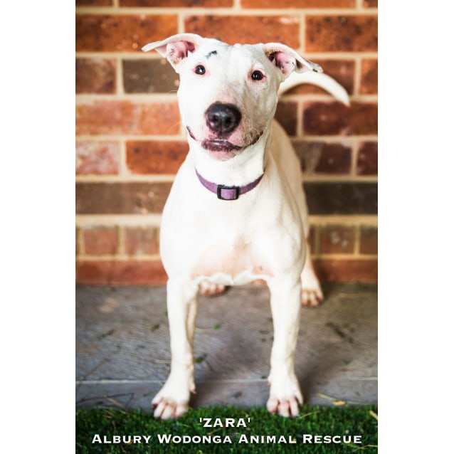 Photo of Zara