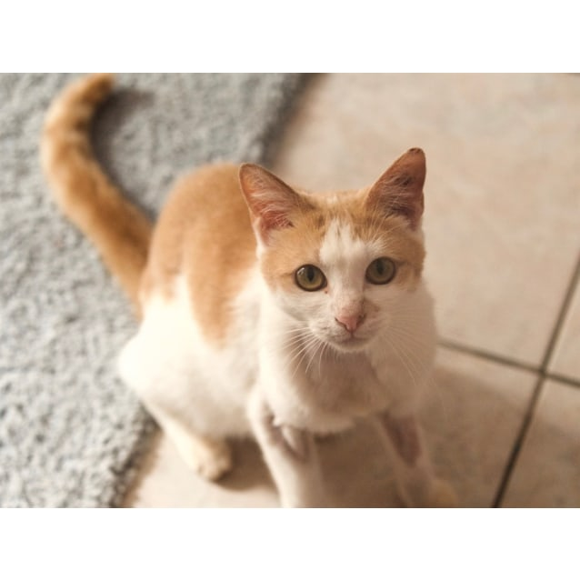 Photo of Buttercup