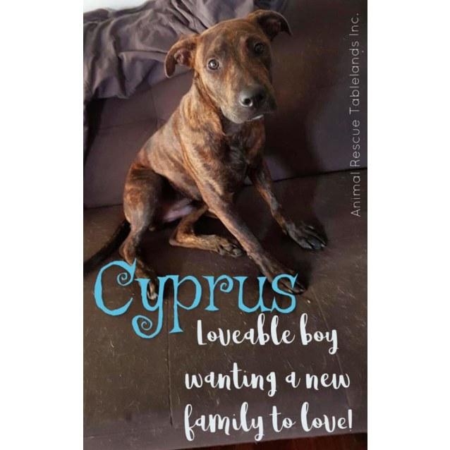 Photo of Cyprus