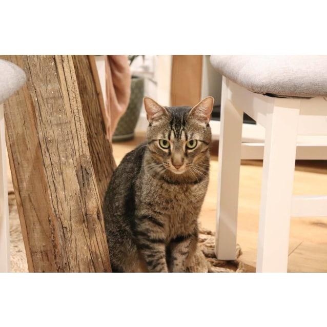 Photo of Oliver (Located In Cheltenham)