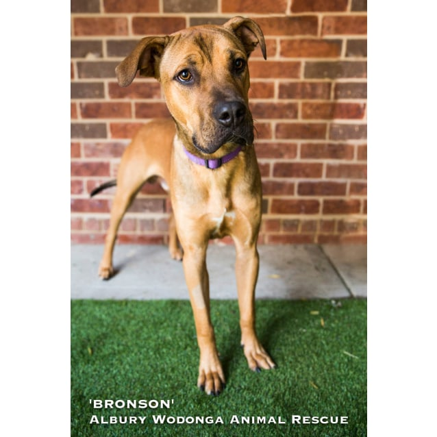 Photo of Bronson