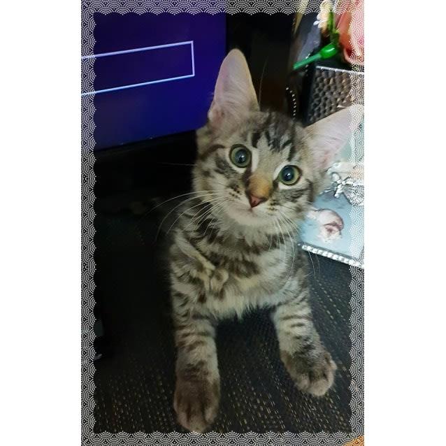 Photo of Turbo