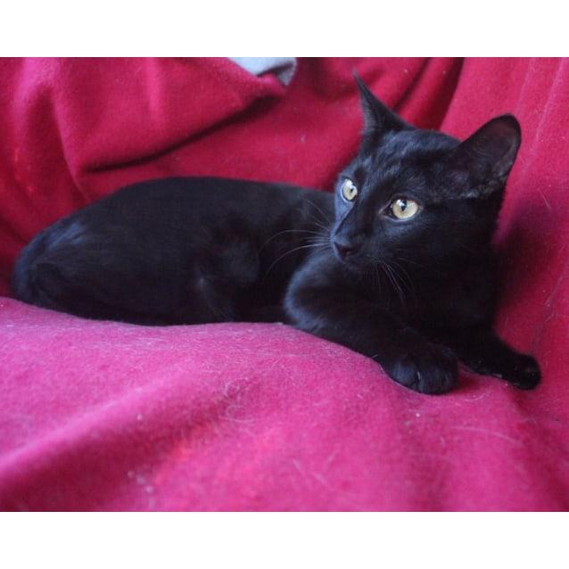 Photo of Nero