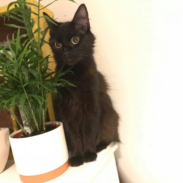 Photo of Ebony (Located In Brighton)