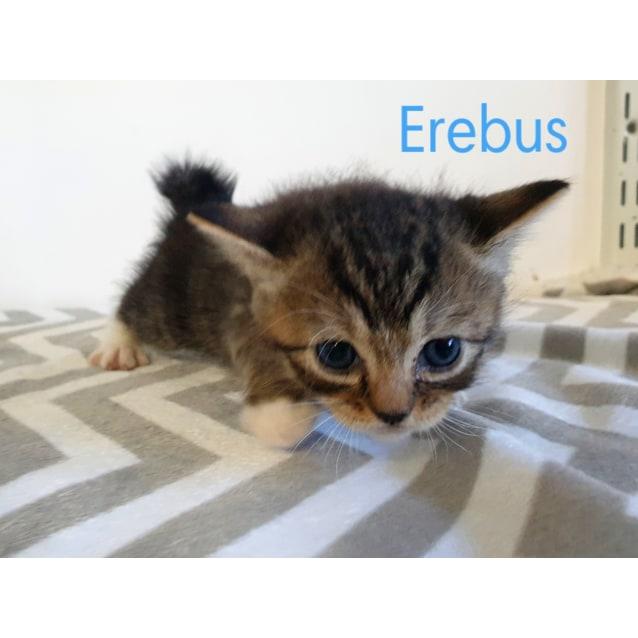 Photo of Erebus