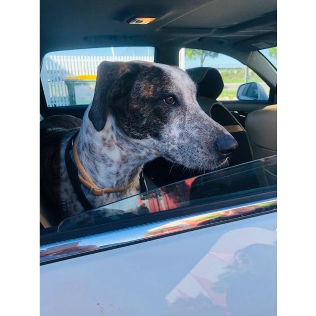 Photo of Buddy 🥰