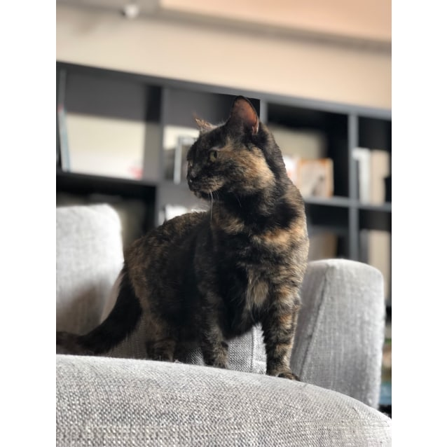 Photo of Chloe   Meet Me At Cat Lounge, Neko Hq Preston