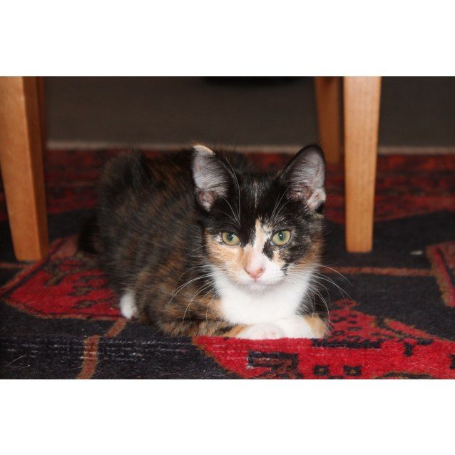 Photo of Sweet Olive (Located In Truganina)