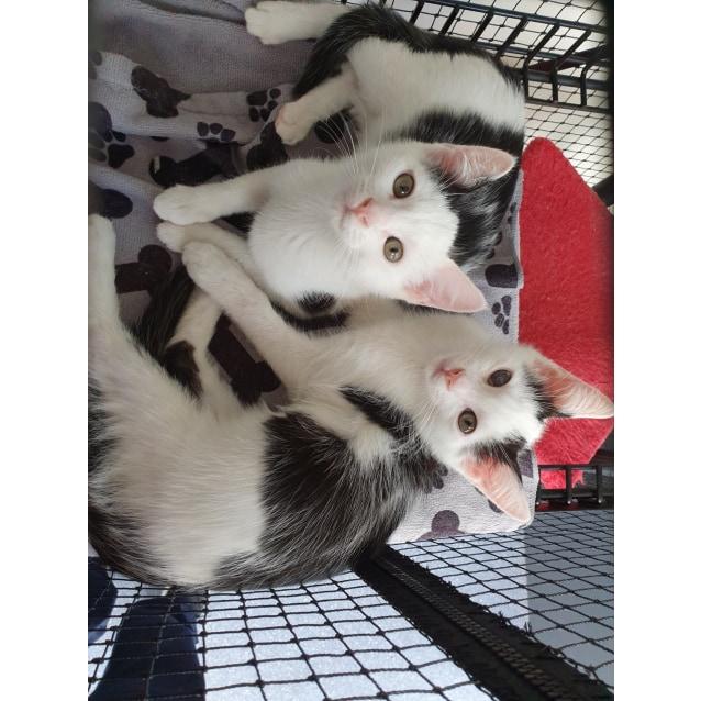 Photo of Alvin, Simon, Theodore