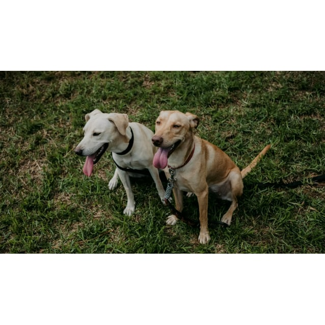 Photo of Echo & Scarlet   Stunning Bonded Pair
