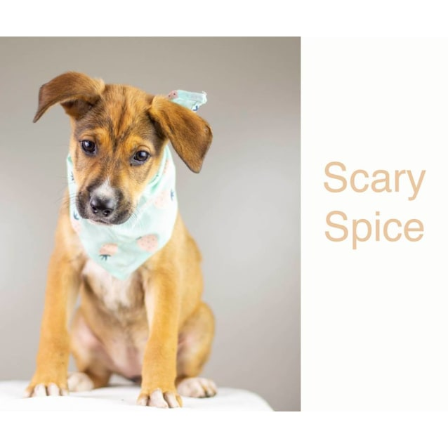 Photo of Scary Spice