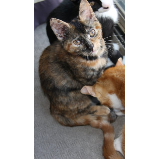 Photo of Caramel (Located In Frankston)