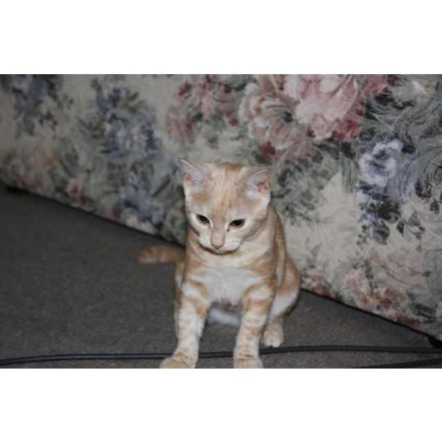 Photo of Creampuff (Located In Lyndhurst)