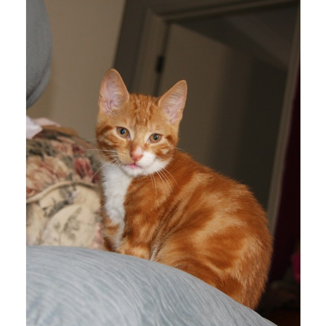 Photo of Gingernut (Located In Lyndhurst)