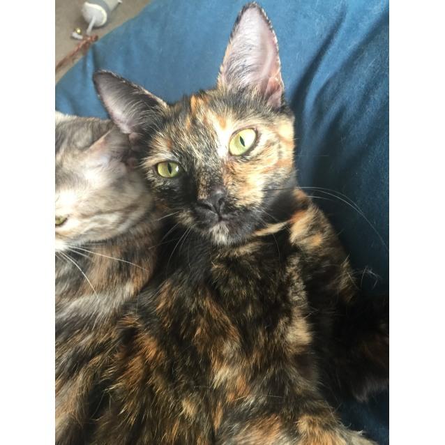 Photo of Lady Chloe & Pipsqueak (Located In Lyndhurst)