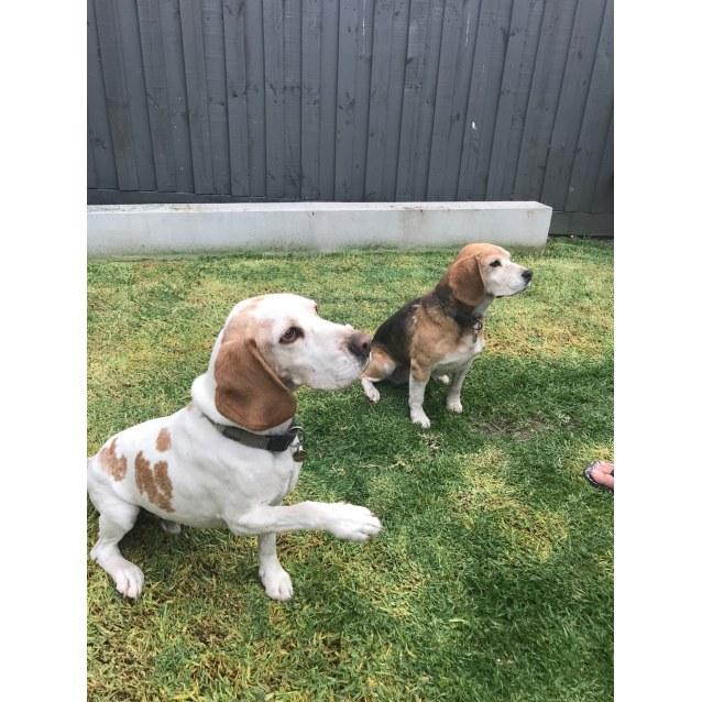 Photo of Daisy & Boston
