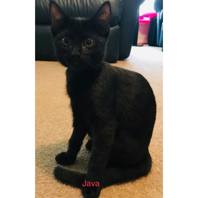 Photo of Java