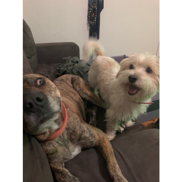 Photo of Boof & Ollie