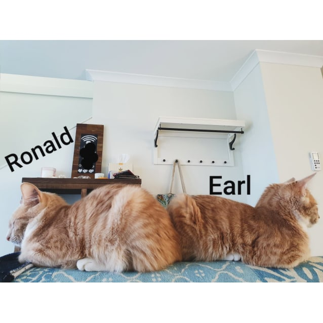 Photo of Ronald (Located In Westmeadows)