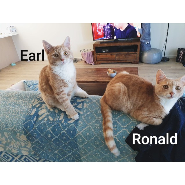 Photo of Earl (Located In Westmeadows)