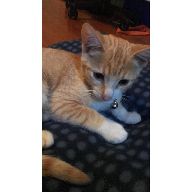 Photo of Scooter (Located In Rowville)