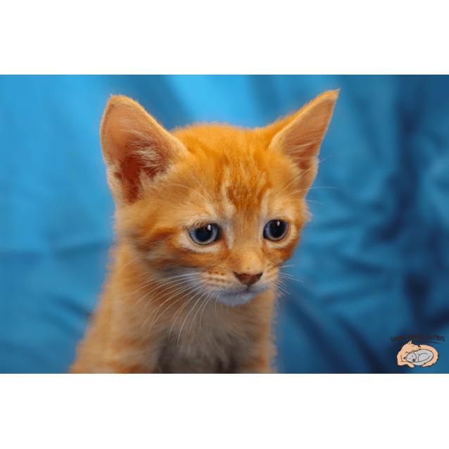 Photo of Whiskers Sk2969