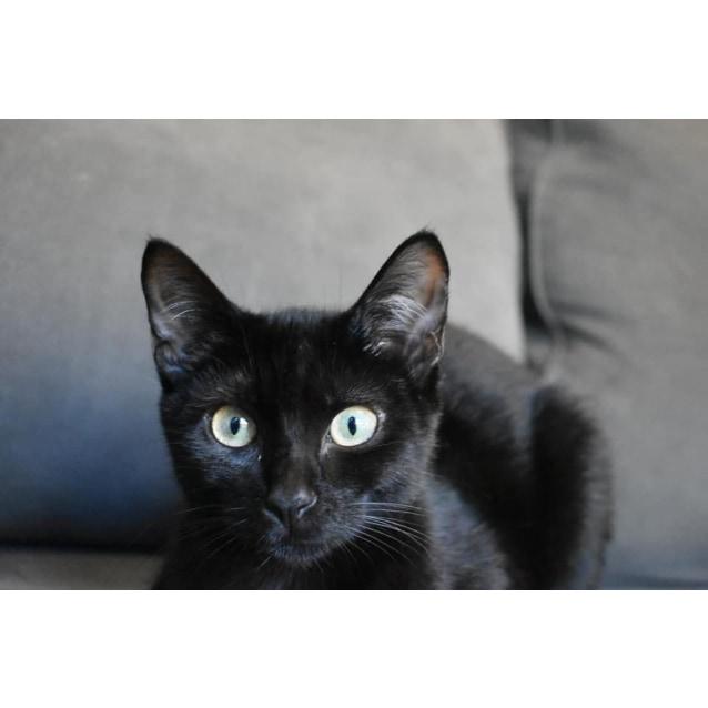Photo of Pugsley
