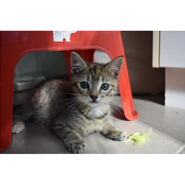 Photo of Ember