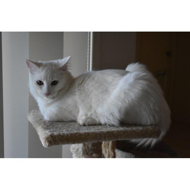 Photo of ❤️jasper A Divine Loving 6 Mth Old❤️