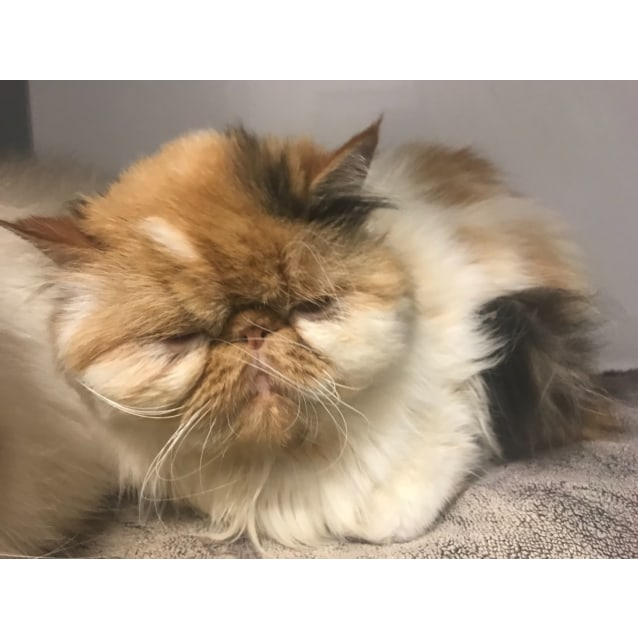 Photo of Mee Meow