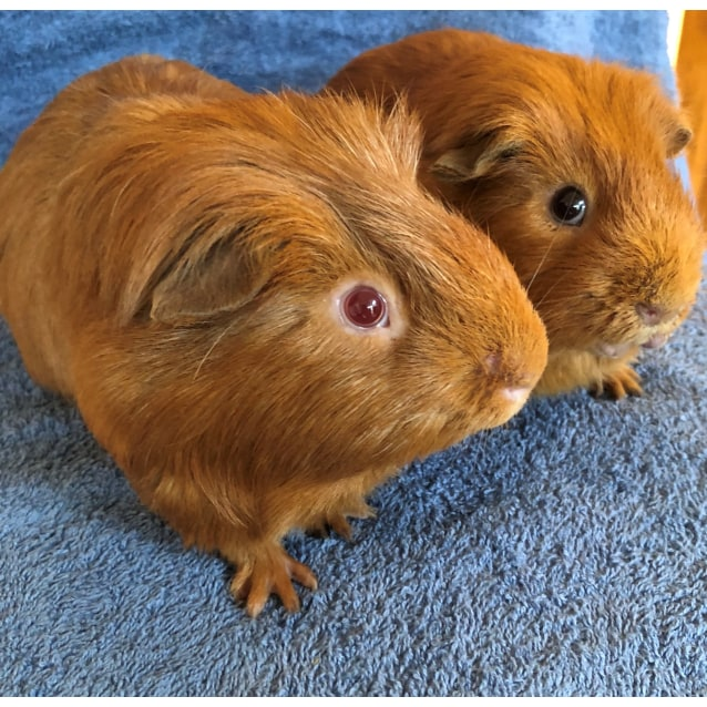 Photo of Butternut And Butterscotch