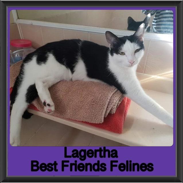 Photo of Lagertha