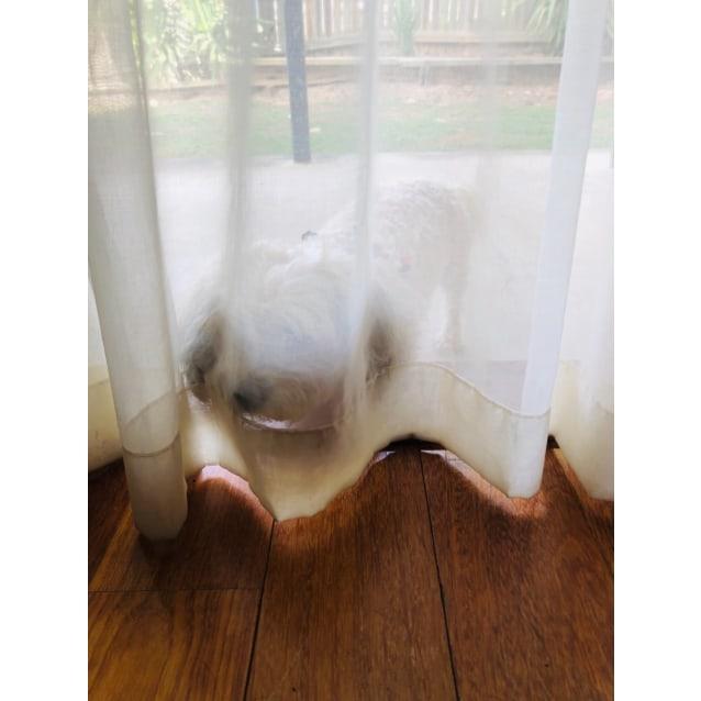 Photo of Molly 🌺🌼🌸