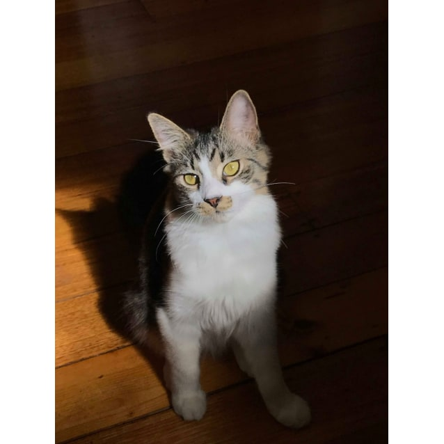 Photo of Luigi (Located In Caulfield North)