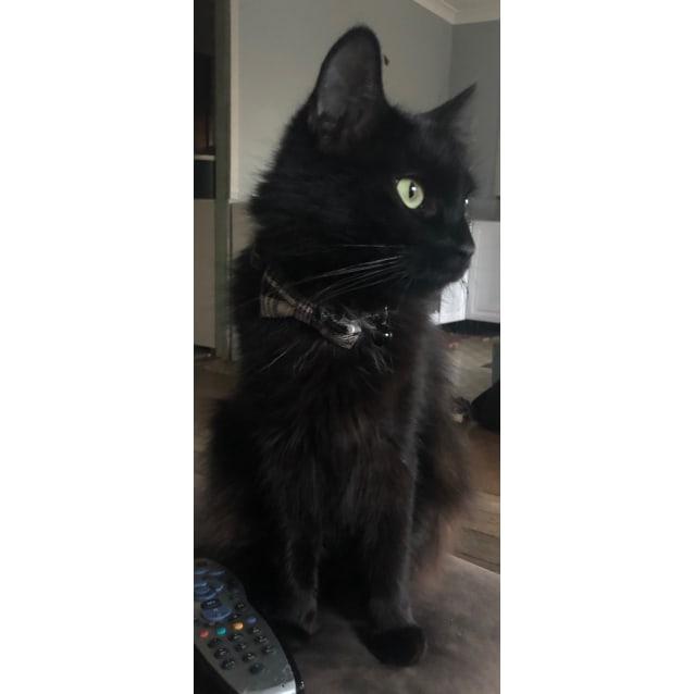 Photo of 🌟 Leila 🌟