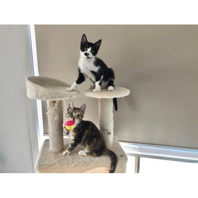 Photo of Jasmine And Wattle Bonded Siblings