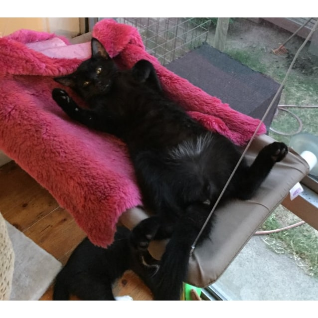 Photo of Kenny ^^Dandy Cat Rescue^^
