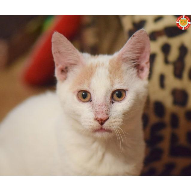 Photo of Perdita
