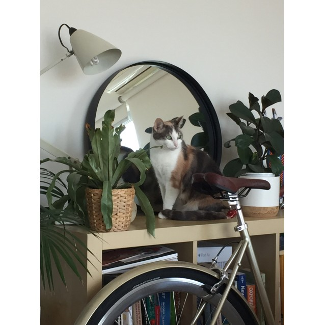 Photo of Aria (Located In St Kilda East)