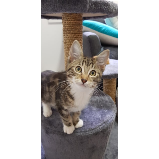 Photo of George (Located In Parkdale)